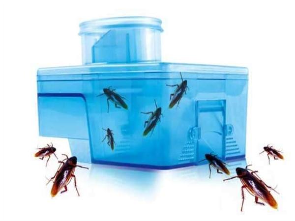 焦作灭蟑螂哪家好,河南灭蟑螂方法,郑州厨房灭除蟑螂