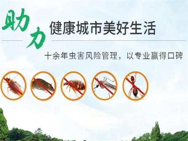 河南灭蚊蝇方法,郑州灭蚊蝇服务,焦作除蚊蝇公司