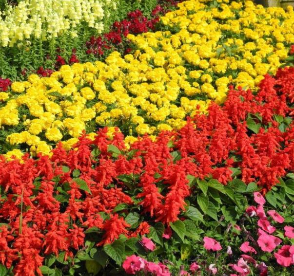 成都花境植物 成都植物批发 成都植物租摆