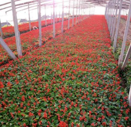 成都草本花卉 成都花境植物 成都植物租摆