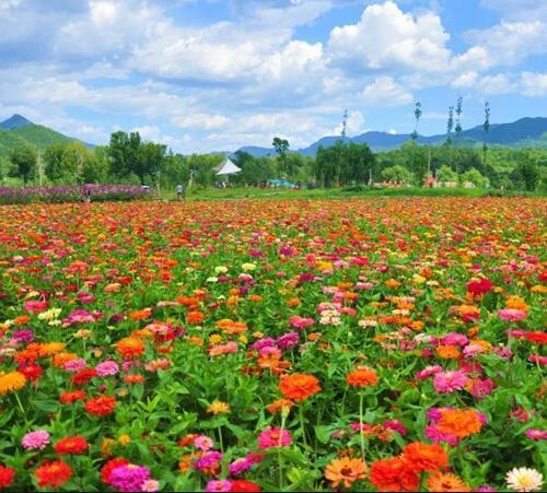 重庆工程苗木基地 重庆草本花卉批发 重庆花境植物种植