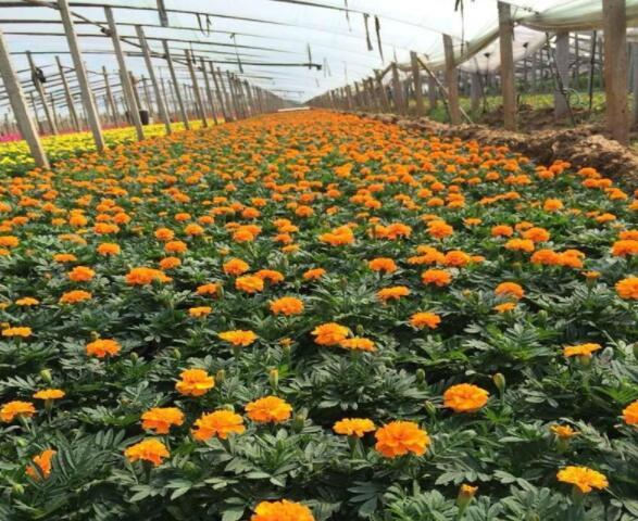 贵州花境植物 贵州植物租摆 贵州工程苗木批发