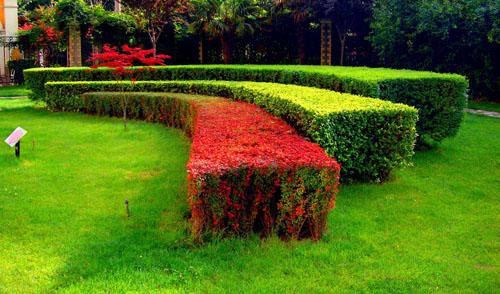 成都园林绿化工程施工|内江园林绿化工程|乐山园林绿化工程
