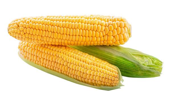 辉县小麦玉米种子_辉县小麦玉米种子零售_辉县水稻种子价格